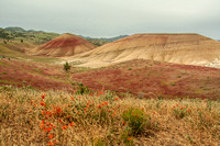 Wildflowers in the Painted Hills