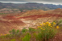 Painted Hills in Bloom