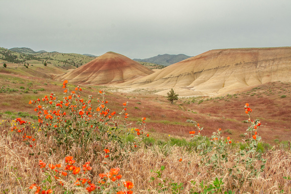 Wildfowers in the Painted Hill Unit