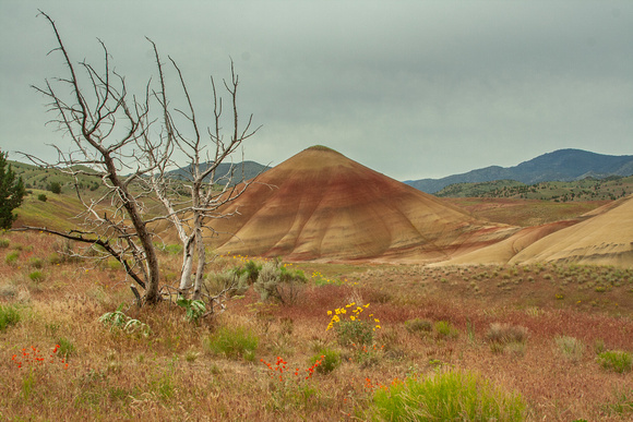 Painted Hills Striped Butte